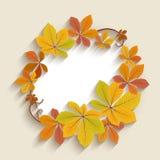 Label d'automne, cadre de cercle avec les feuilles jaunes Photo stock