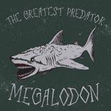 Label de vintage avec le requin-Megalodon Photos libres de droits