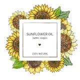 Label design template for extra virgin sunflower oil. Vector hand drawn illustration sunflowers on square frame on white stock illustration