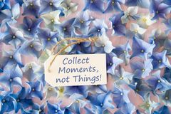 Hydrangea Flat Lay, Quote Collect Moments Not Things. Label With English Quote Collect Moments Not Things. Flat Lay Of Hydrangea Blossoms stock photo