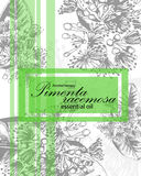 Label for essential oil of pimenta racemosa Stock Photos