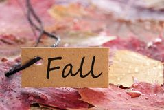 Label with Fall on it. A brown label with a written Fall on it and autumn leaves in the background Royalty Free Stock Image