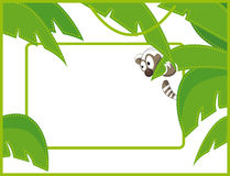 Label frame raccoon. Label green frame - funny raccoon Royalty Free Stock Image
