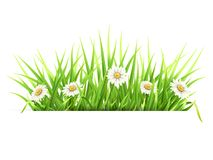 Label with green grass and daisies. White paper banner. Template for spring seasonal card Stock Photo