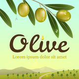 Label of green olives. Realistic olive branch on a background an olive farm. Stock Photography