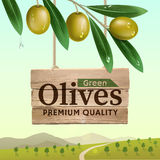 Label of green olives. Realistic olive branch. Wooden banner. Design elements for packaging. Vector illustration Stock Photo
