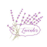 Label with lavender. Flowers and damask frame. Vector illustration Stock Images