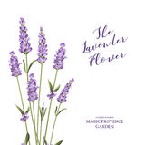 Label with lavender flowers. Stock Photos