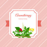Label médical d'herbes d'Aromatherapy Photo libre de droits