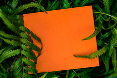 Label paper on green leaf Royalty Free Stock Image