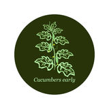 Label for seeds and seedlings of cucumber Stock Photos