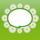 Label with the daisies. Label with the spring motive for advertising, price tags, etc Stock Image
