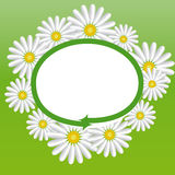 Label with the daisies. Label with the spring motive for advertising, price tags, etc Royalty Free Stock Images