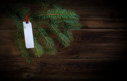 Label on spruce branch Stock Photos