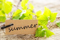 Label with summer. A natural looking label with summer written on it and with green leaves and wood as background Stock Photos