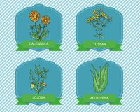 Label templates with plants - calendula, jojoba , aloe vera, tutsan. Royalty Free Stock Photo