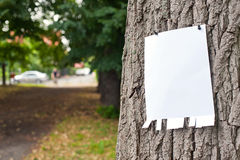 Label on tree Royalty Free Stock Images
