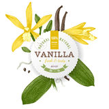 Label with type design and vanilla plant Royalty Free Stock Image