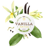 Label with type design and vanilla plant Stock Photo