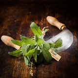 Labeled Sage with a chopping knife Stock Photos
