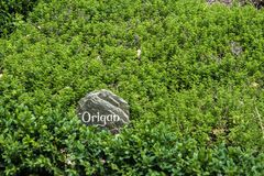 A labelled oregano bush in a French garden Stock Photos