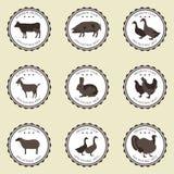 Labels avec des animaux familiers Image libre de droits