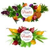 Labels de nourriture de fruit et de baie illustration libre de droits