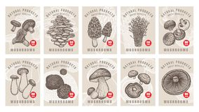 Labels with edible mushrooms set. Labels with edible mushrooms. Set templates price tags for shops, markets of organic vegetarian food. Vector illustration art Stock Photos
