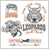 Labels, emblems and design elements for sport club with leopard. Labels, emblems and design elements for sport club with leopard on white background Royalty Free Stock Image