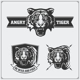 Labels, emblems and design elements for sport club with tiger head. Black and white Royalty Free Stock Image