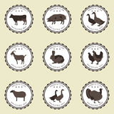 Labels with Pets. On a beige background nine stickers with the image of animals Royalty Free Stock Image