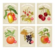 Price tags for berries and fruits. Labels with various fruits, berries and inscriptions. Set templates price tags for shops and markets of organic vegetarian Royalty Free Stock Images