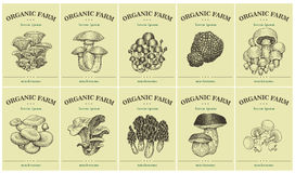 Labels with various Mushrooms. Set templates price tags for shops and markets of organic food. Vector illustration art Royalty Free Stock Images