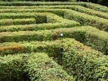 Laberinto del laberinto de arbustos verdes cortados ordenanza Imagen de archivo libre de regalías