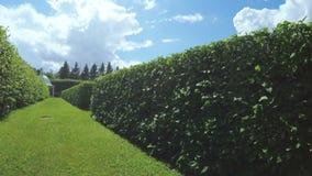 Laberinto entre los arbustos almacen de metraje de vídeo