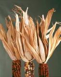 Laberinto, maíz indio Fotos de archivo