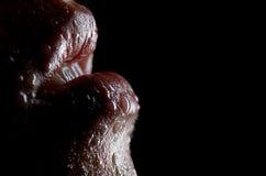 Labios mojados Imagen de archivo libre de regalías