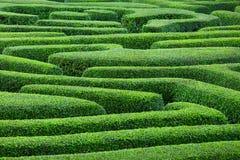 Labirinto da planta Fotos de Stock Royalty Free
