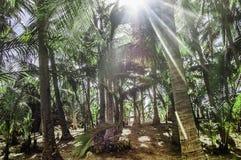 Labirinto de Palmtree Imagens de Stock