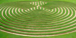 labirinto del giardino dell'erba o del prato inglese   Fotografie Stock Libere da Diritti
