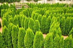 Labirinto dell'albero Immagine Stock Libera da Diritti