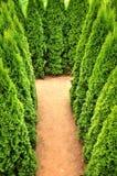 Labirinto dell'albero Fotografie Stock
