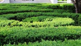 Labirinto do labirinto de arbustos altos zoom video estoque