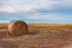 Labirinto do milho Foto de Stock Royalty Free