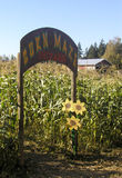 labirynt kukurydziany Obrazy Stock
