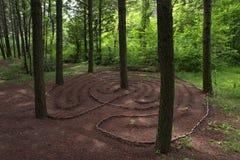 Labitynt formy rożki w lesie Obrazy Stock