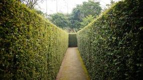 Labitynt, labirynt, ogród, zieleń, natura, roślina, kwiat fotografia stock