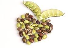 Lablab bean or Dolichos bean (Dolichos lablab Linn.). Sort seed of a heart stock images