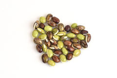 Lablab bean or Dolichos bean (Dolichos lablab Linn.) Stock Image