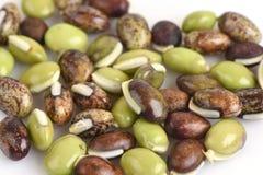 Lablab bean or Dolichos bean (Dolichos lablab Linn.) Royalty Free Stock Images